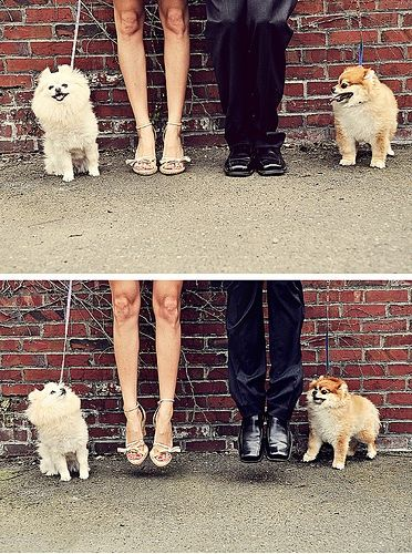 This playful jump involves the bride and groom, as well as their small dogs.