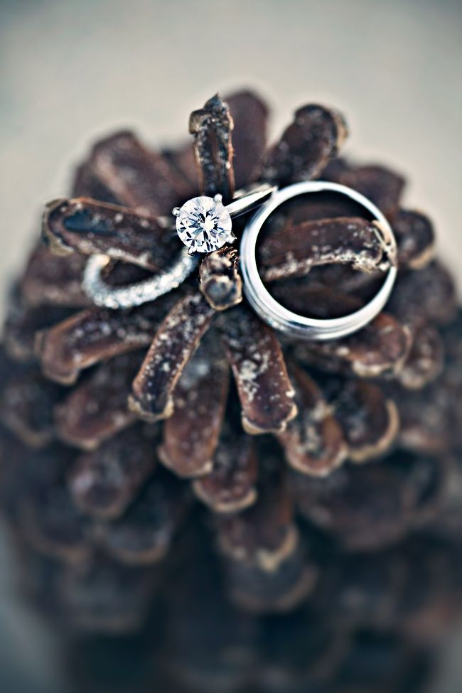 Round diamond engagement ring and wedding bands photographed on pine cones