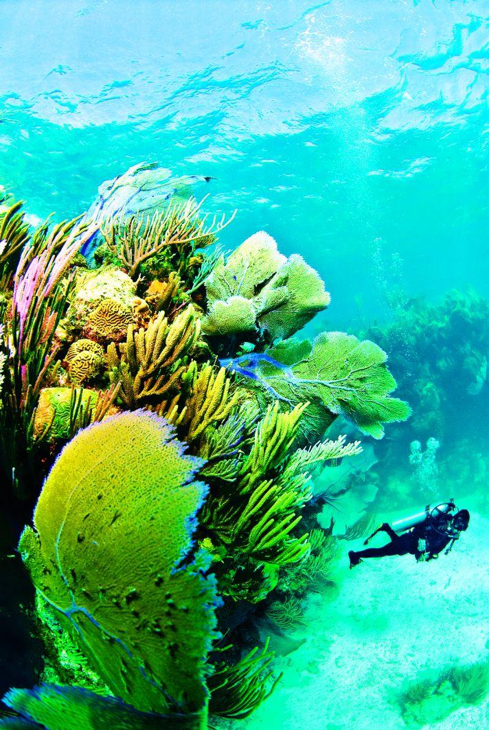 Bermuda scuba diver with coral