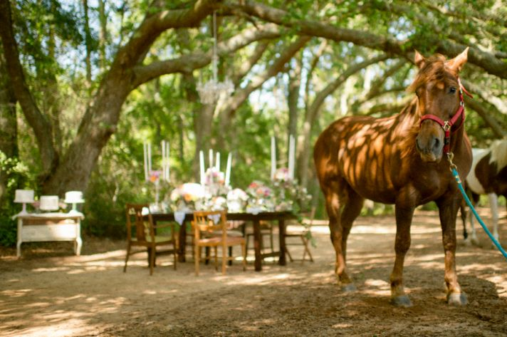 Rustic wedding with a horse
