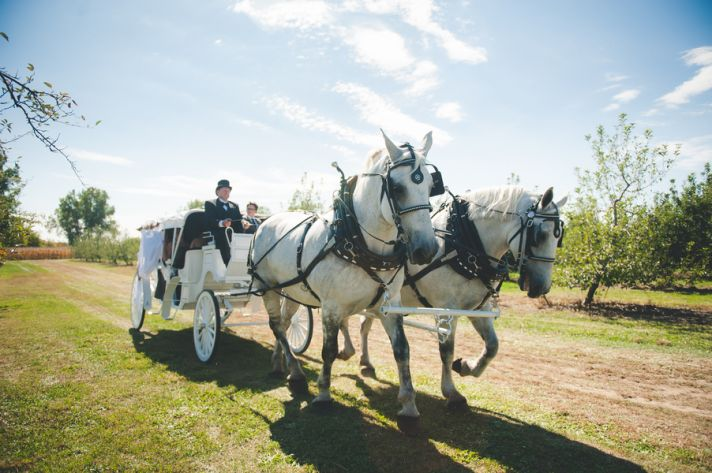 Bride Entrance with Horse and Carriage